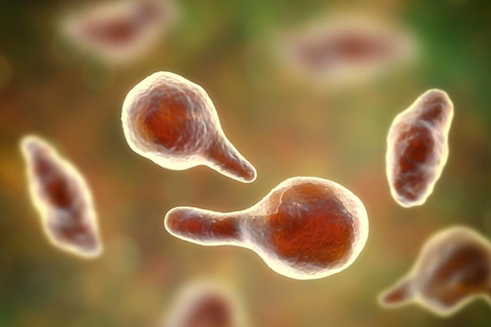 Mycoplasma genitalium что это у женщин